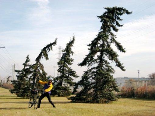 vik-windy-trees