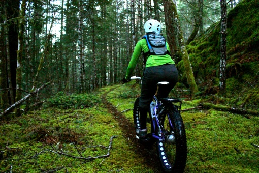 Gloomy forest singletrack...