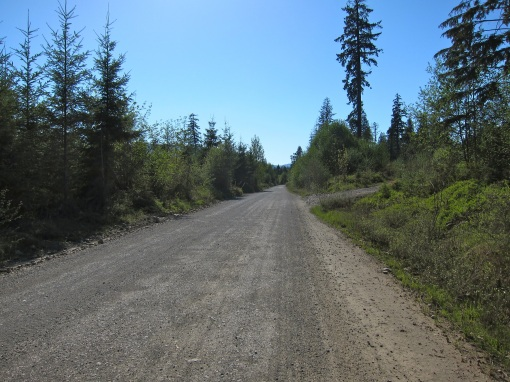 Logging road...